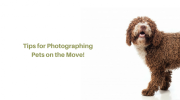 Tips for Photographing Pets on the Move