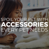 Pet Appreciation Week: Spoil Your Pet with Accessories Every Pet Needs